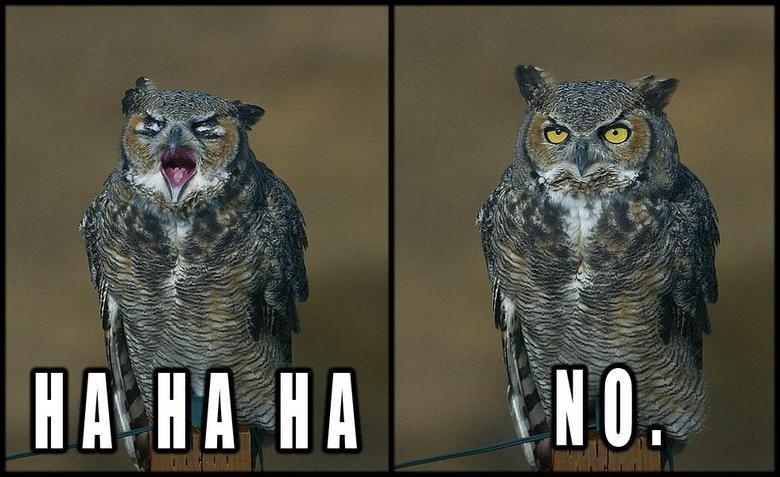 Hahaha_No_Owl.jpg